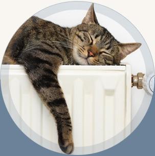 Katze liegt entspannt auf Heizkörper